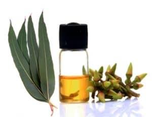 Eucalyptus oil and plant.