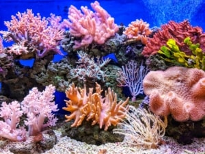 Colorful coral reef.