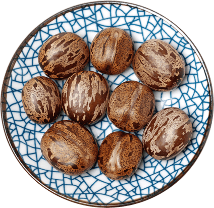 Castor seeds in a bowl.