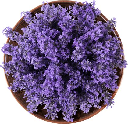 Lavender in a bowl.