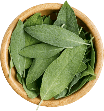 Sage in a bowl.