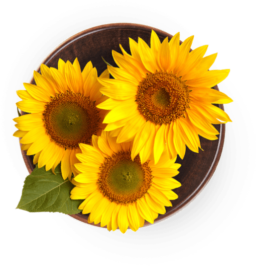 Sunflowers in a bowl.