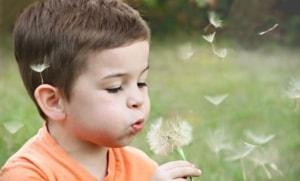 Kid blowing on a dandelion.